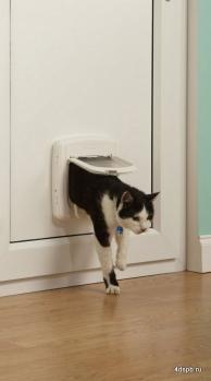 Межкомнатная дверь с лазом для кошки
